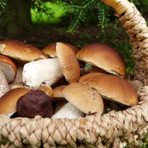 Funghi Porcini e prodotti ai porcini